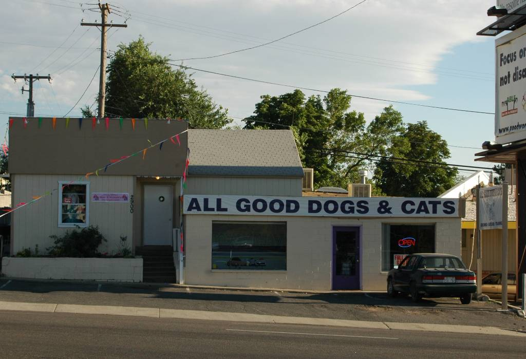 All Good Dogs and Cats