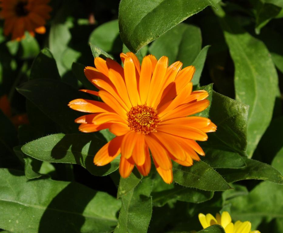 November Flowers 28 Images November Birth Flower The