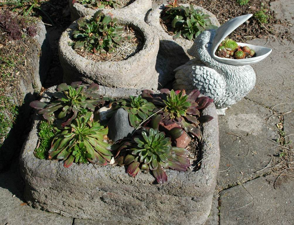 Rock Garden Containers